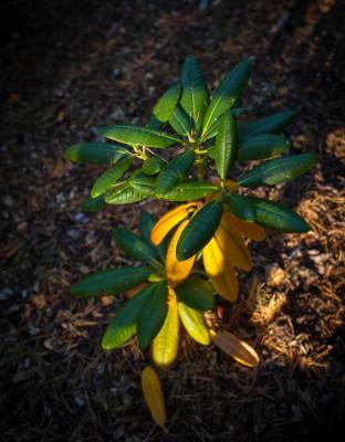 keltaiset lehdet
