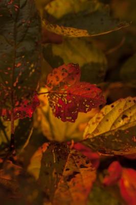 keltaiset lehdet-6