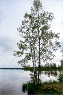 Papinjärven aamu-6